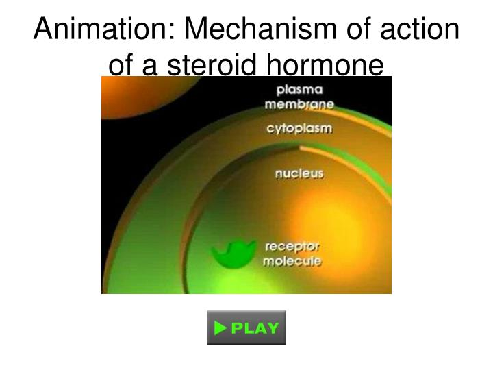 Animation: Mechanism of action of a steroid hormone
