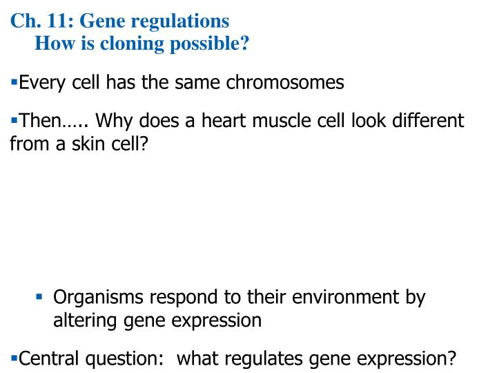 Ch 11 gene regulations how is cloning possible
