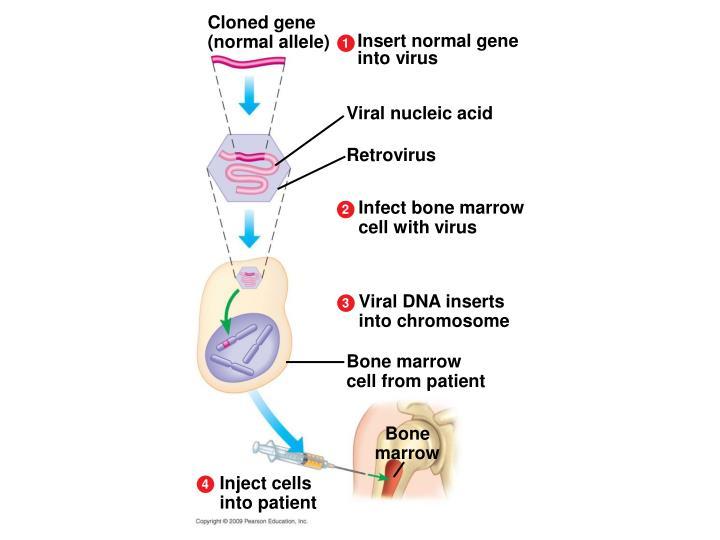 Cloned gene