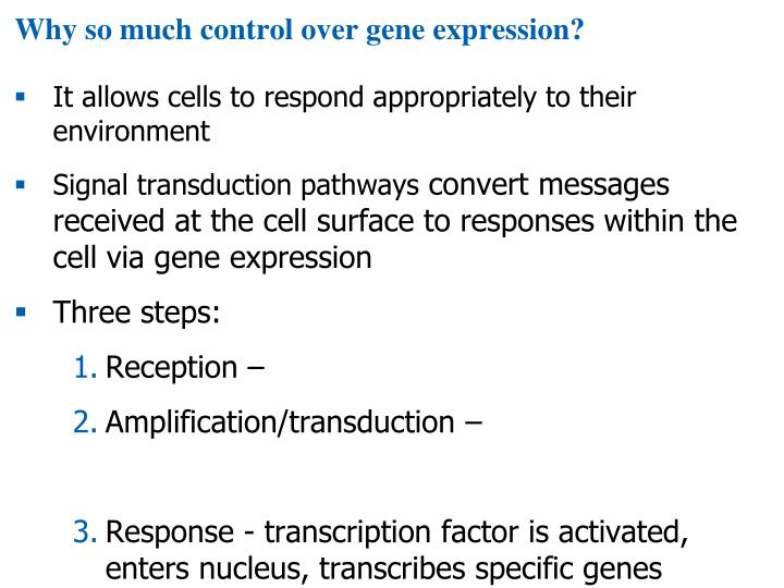 Why so much control over gene expression?