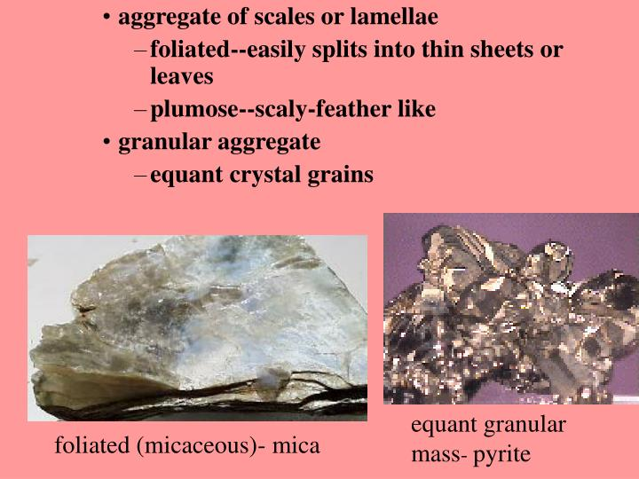 aggregate of scales or lamellae