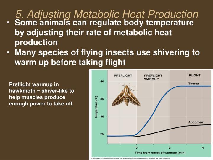 5. Adjusting Metabolic Heat Production