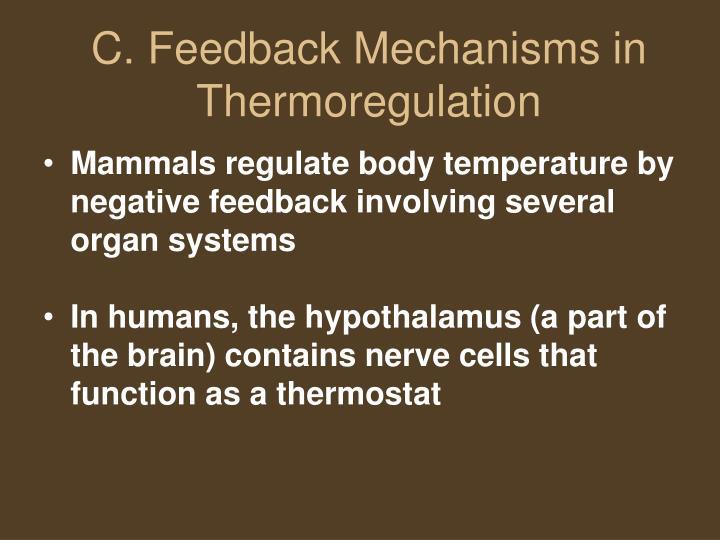 Mammals regulate body temperature by negative feedback involving several organ systems