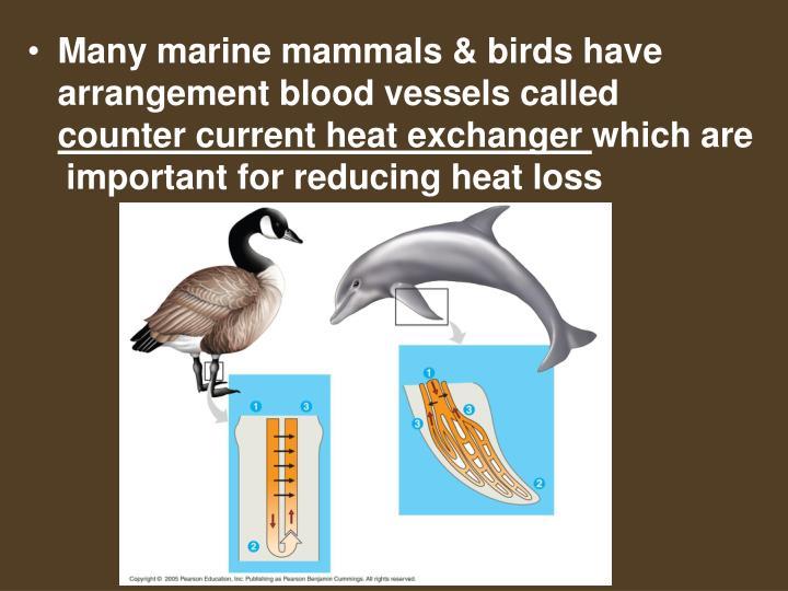 Many marine mammals & birds have arrangement blood vessels called