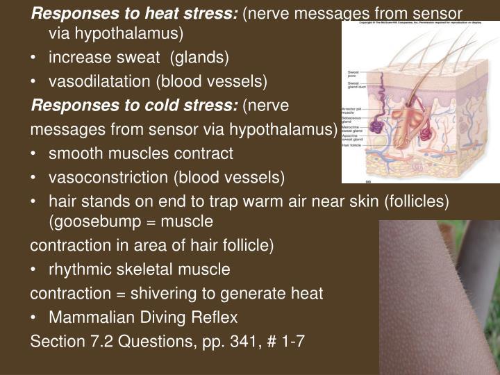 Responses to heat stress: