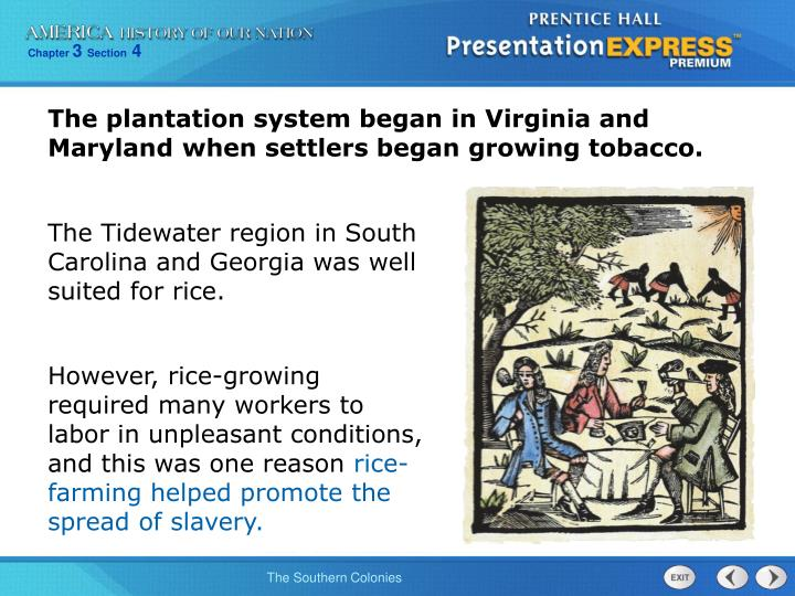 The plantation system began in Virginia and Maryland