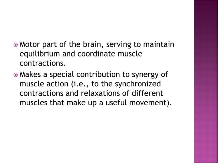 Motor part of the brain, serving to maintain equilibrium and coordinate muscle contractions.