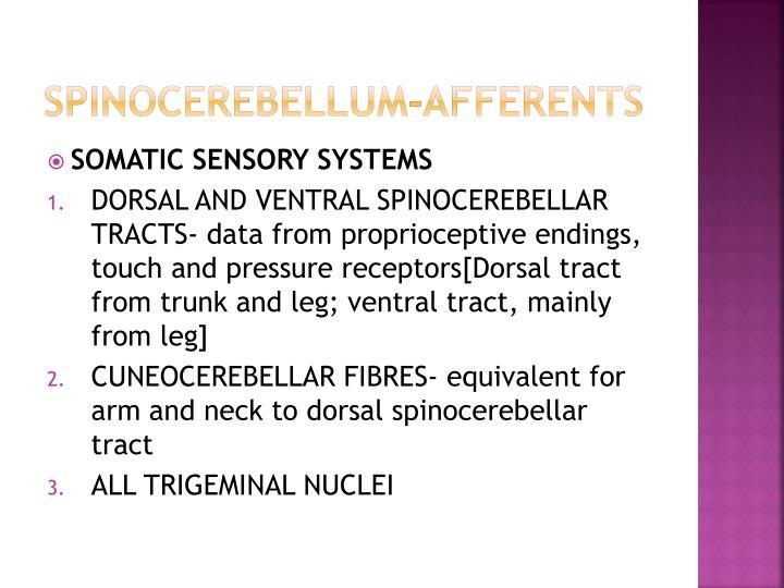 Spinocerebellum