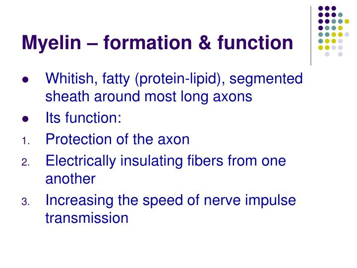 Myelin – formation & function