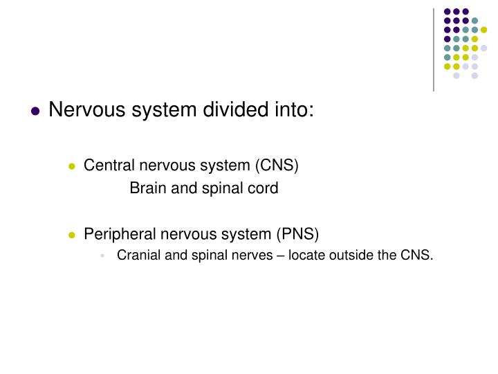 Nervous system divided into: