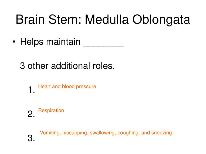 Brain Stem: Medulla Oblongata