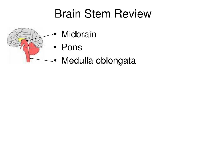 Brain Stem Review
