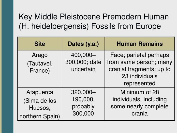 Key Middle Pleistocene Premodern Human (H. heidelbergensis) Fossils from Europe
