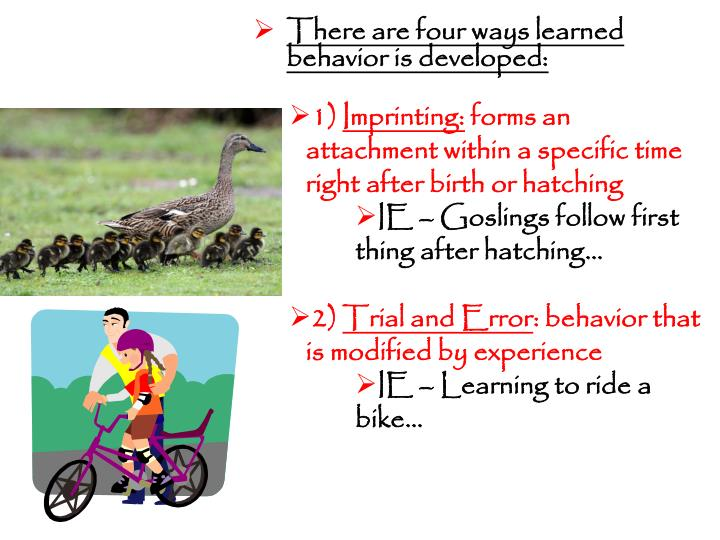 There are four ways learned behavior is developed: