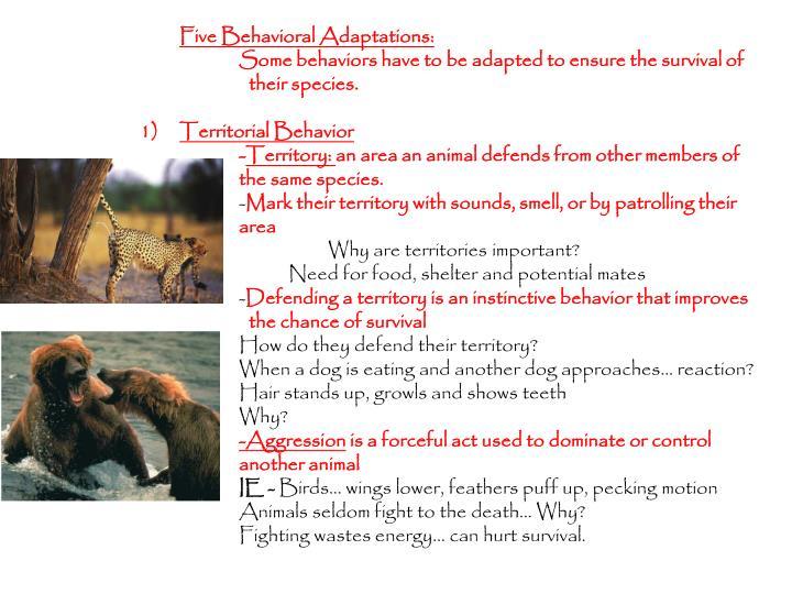 Five Behavioral