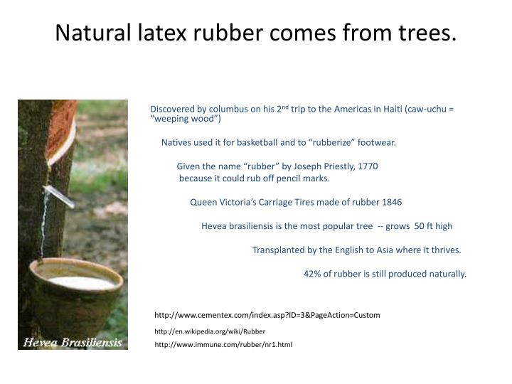 Natural latex rubber comes from trees