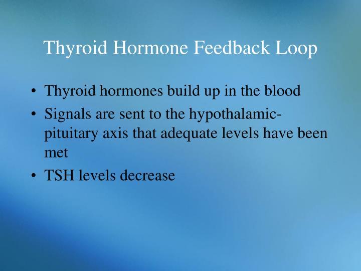 Thyroid Hormone Feedback Loop