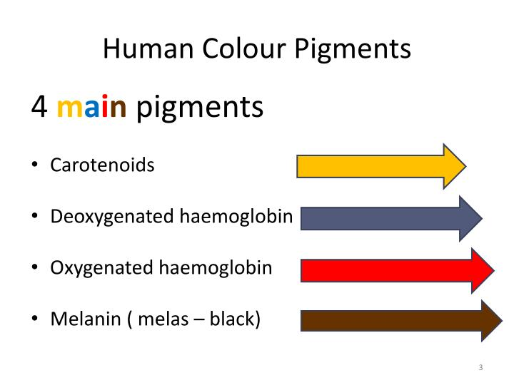 Human colour pigments