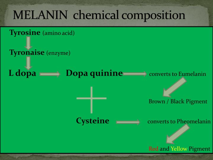 MELANIN  chemical composition