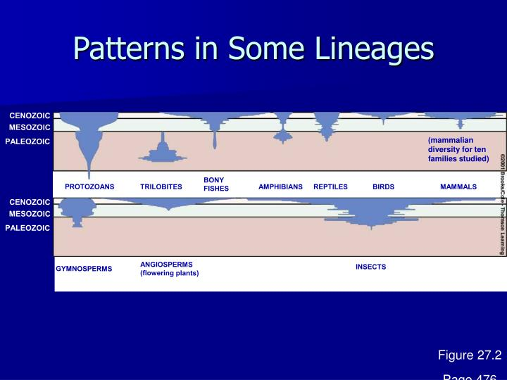 Patterns in Some Lineages
