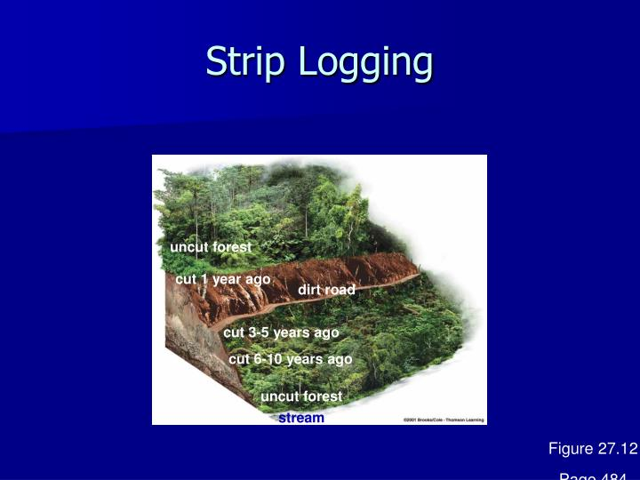Strip Logging
