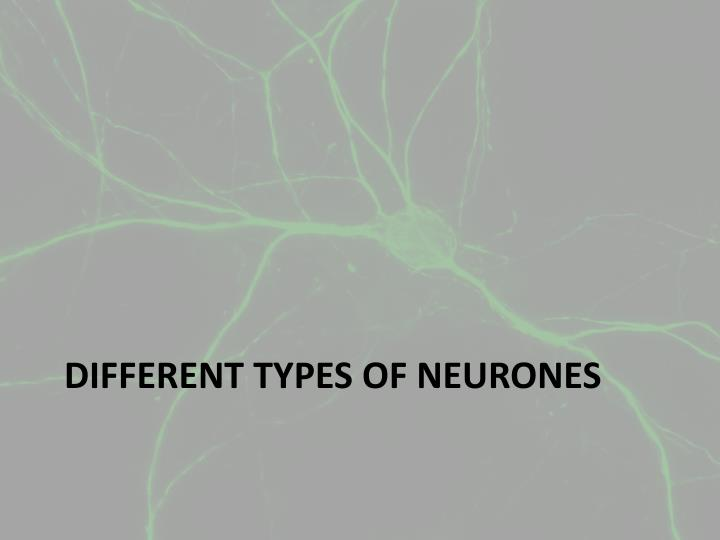 Different types of neurones