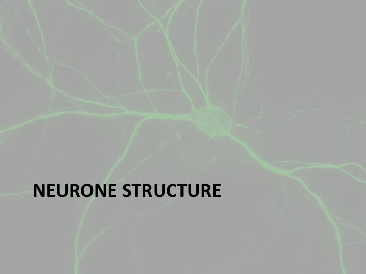Neurone structure