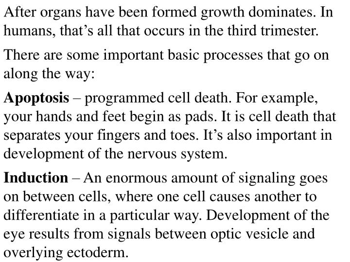 After organs have been formed growth dominates. In humans, that's all that occurs in the third trimester.