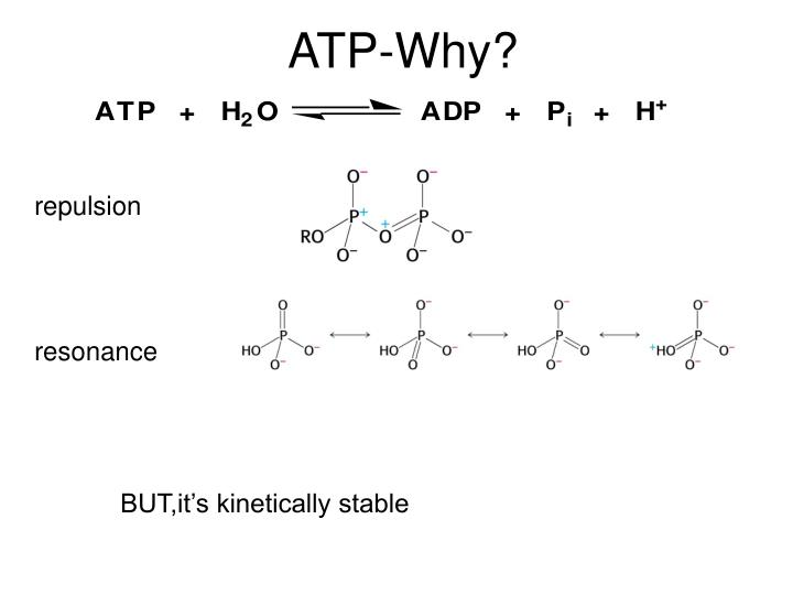 ATP-Why?