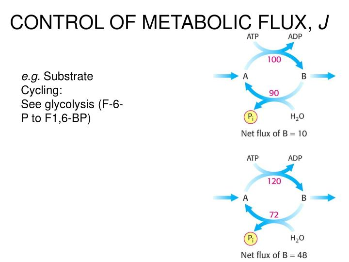 CONTROL OF METABOLIC FLUX,