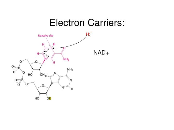 Electron Carriers:
