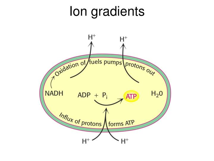 Ion gradients