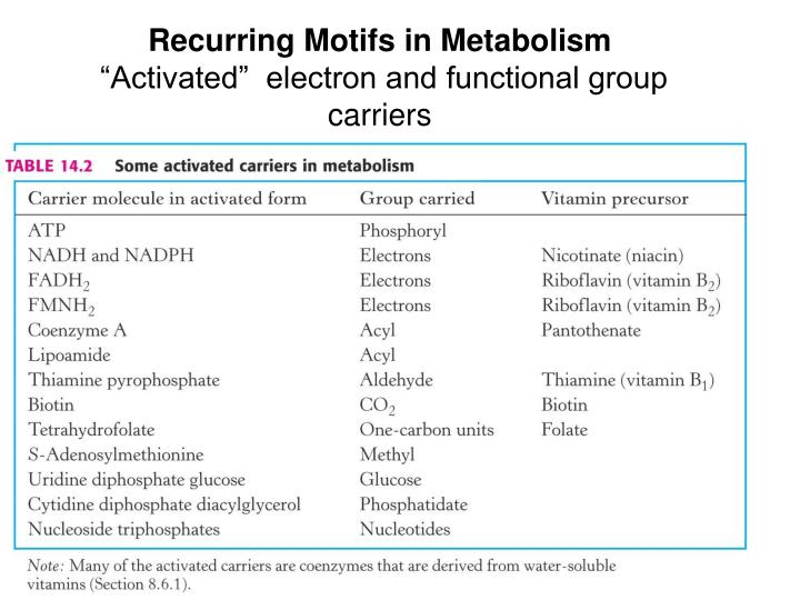 Recurring Motifs in Metabolism