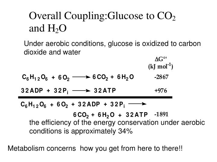 Under aerobic conditions, glucose is oxidized to carbon dioxide and water