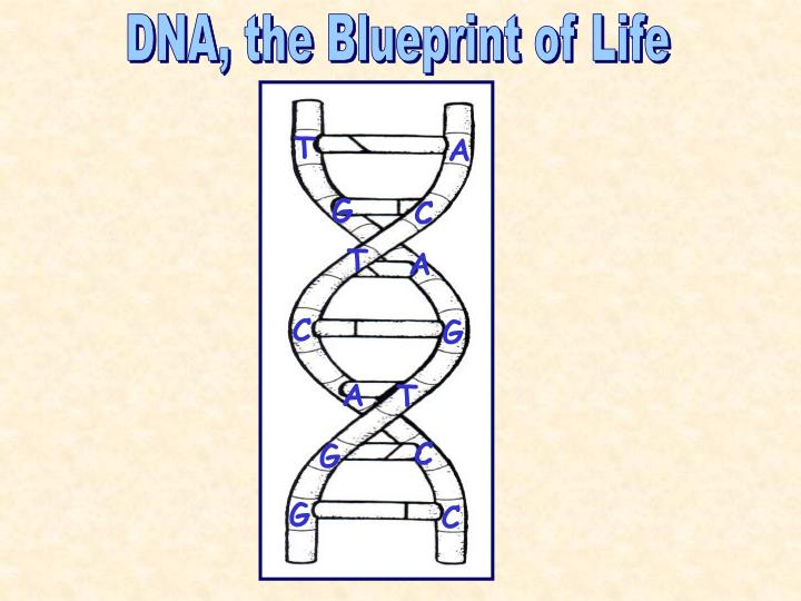 DNA, the Blueprint of Life