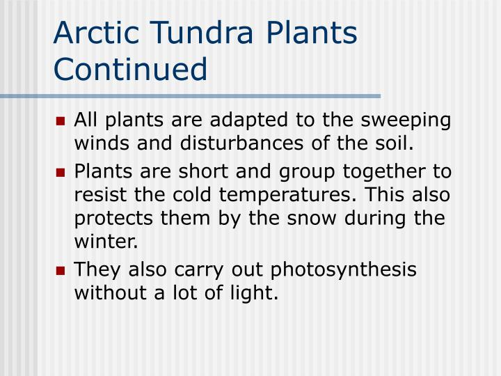 Arctic Tundra Plants Continued