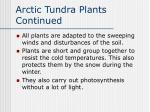 arctic tundra plants continued