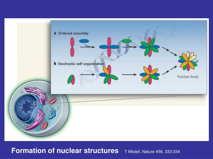 Formation of nuclear structures