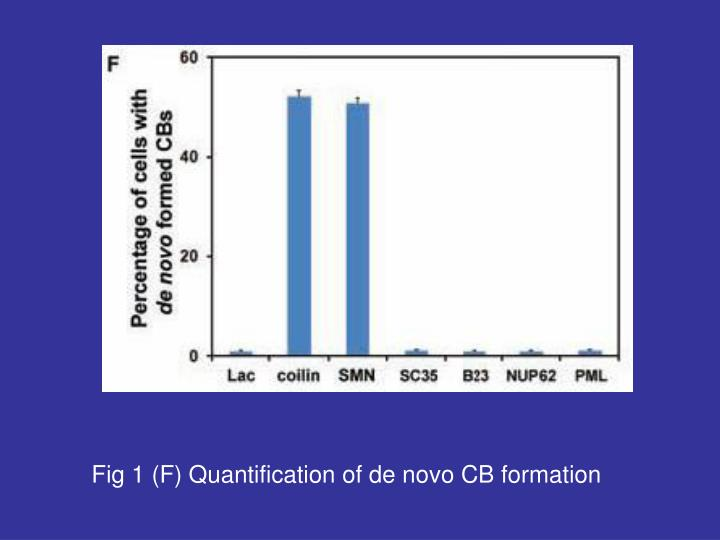 Fig 1 (F) Quantification of de novo CB formation