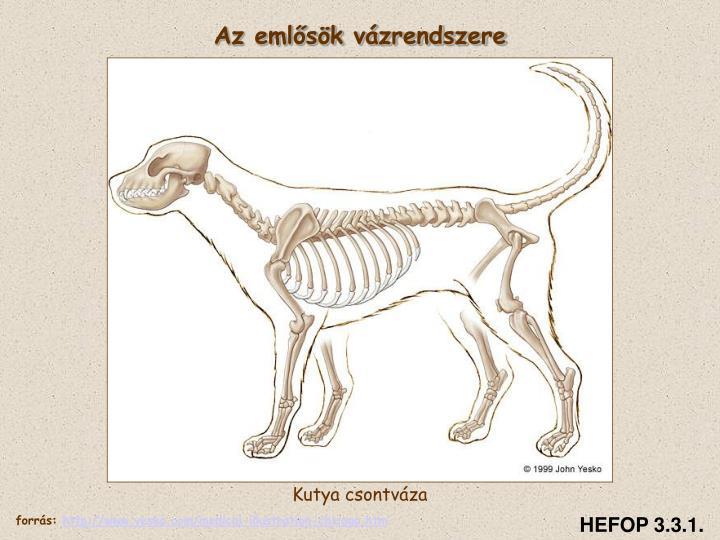 Az emlősök vázrendszere
