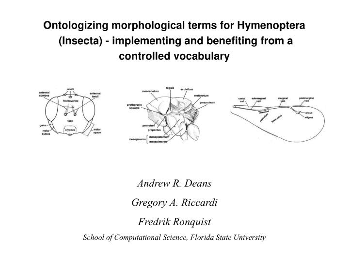 Ontologizing morphological terms for Hymenoptera