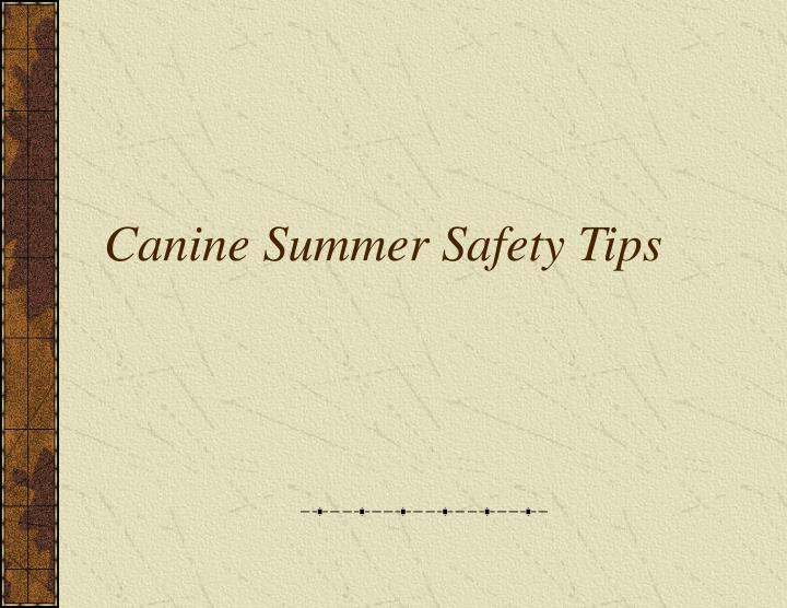 Canine summer safety tips