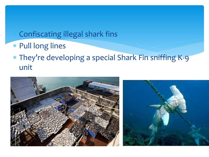 Confiscating illegal shark fins
