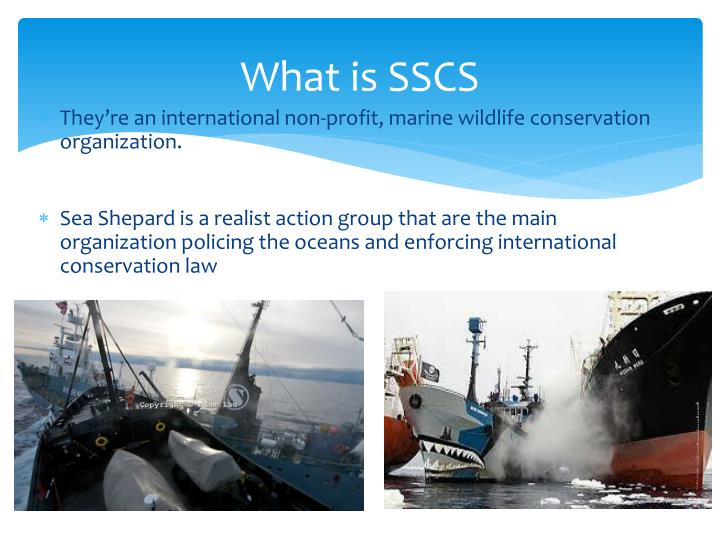 What is sscs