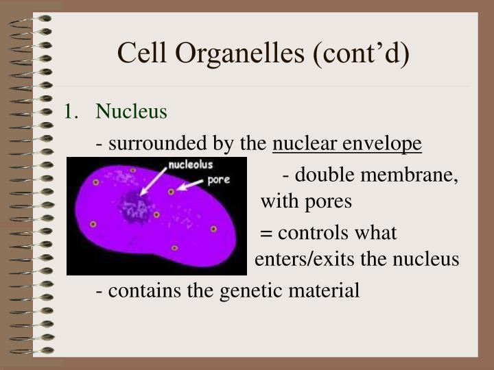 Cell Organelles (cont'd)