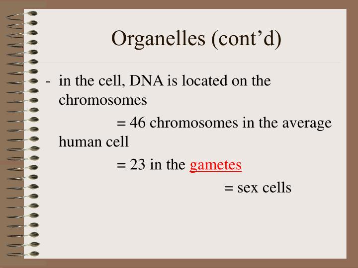 Organelles (cont'd)