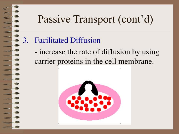 Passive Transport (cont'd)