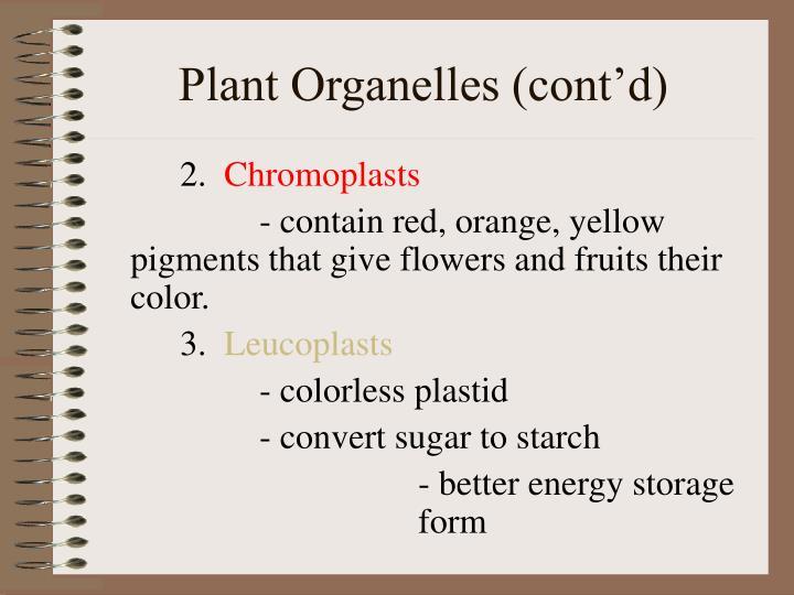 Plant Organelles (cont'd)