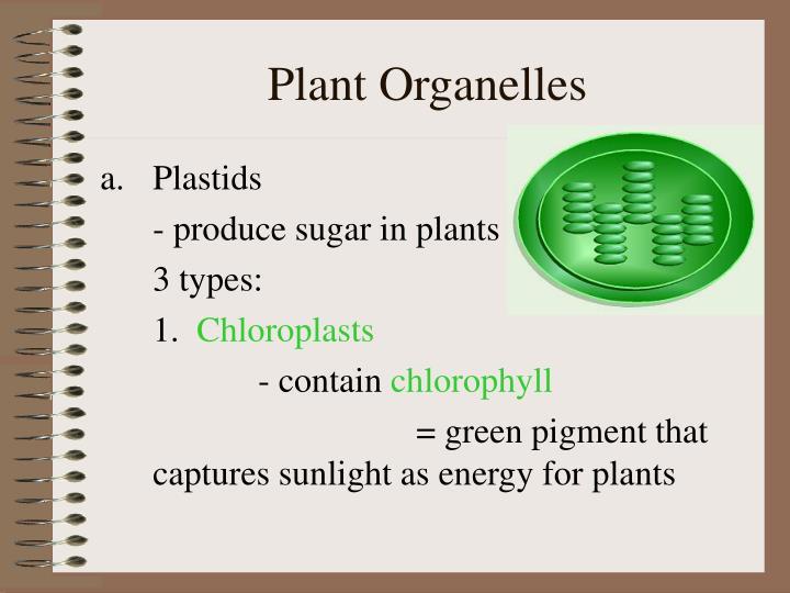 Plant Organelles