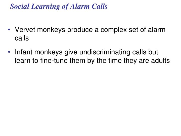 Social Learning of Alarm Calls